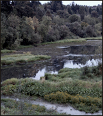 the rockless creek